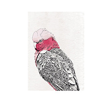Marini Ferlazzo Birds Tea Towel 50x70cm Galah