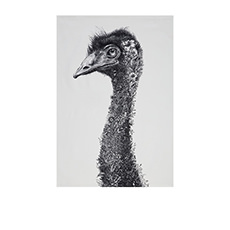 Marini Ferlazzo Tea Towel 50x70cm Emu